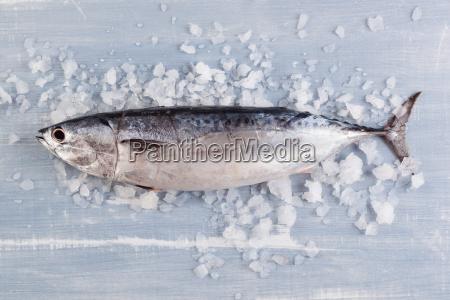 frischer thunfisch auf eis