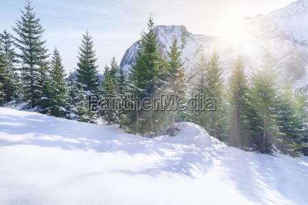 winter austria dezember schnee wald forst