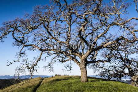 tree in meadow against clear blue
