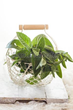 basket of fresh spearmint