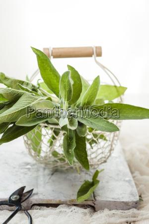 basket of fresh sage
