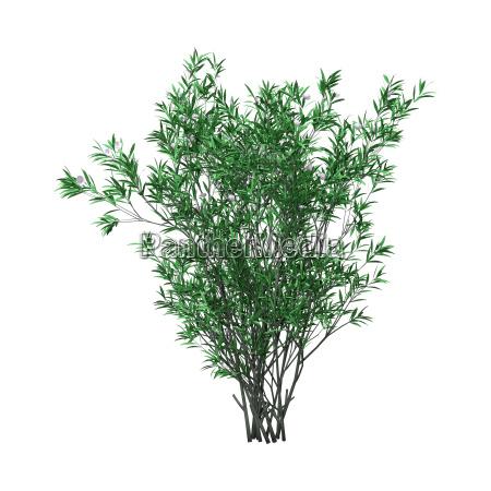 3d rendering oleander bush with flowers