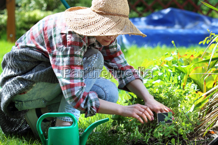 plant care in the garden planting