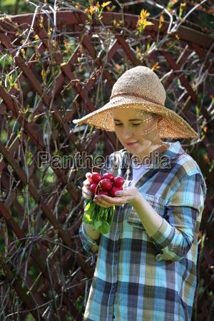 fresh aromatic radishes gardener breaks vegetables