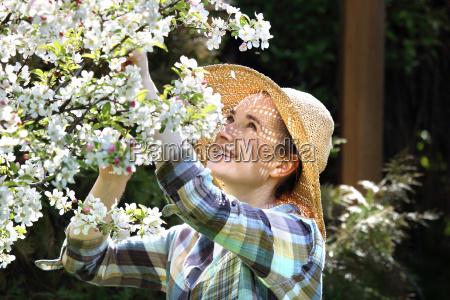 bluehender apfelbaum fruehling im obstgarten bluehende