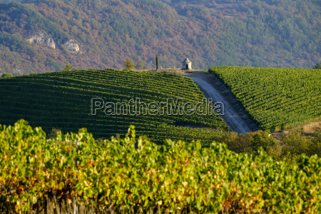 cahors vineyards lot quercy france europe