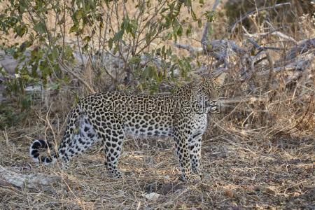 fahrt reisen farbe nationalpark afrika horizontal