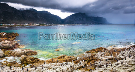 beautiful landscape with wild penguins