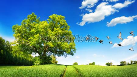 big oak on green field on
