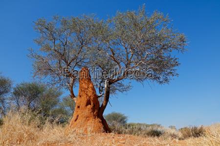 baum und termitenhuegel