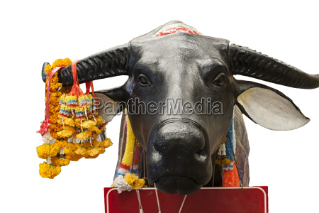 ox animal holly offerings oriental
