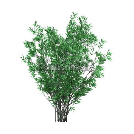 3d rendering oleander bush mit blumen