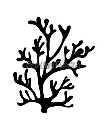 red algae silhouette vector symbol icon