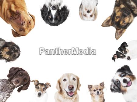 various dog heads circle arrangement