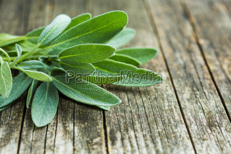 salvia officinalis salat blaetter