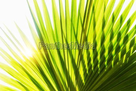 close up of palm leaf on
