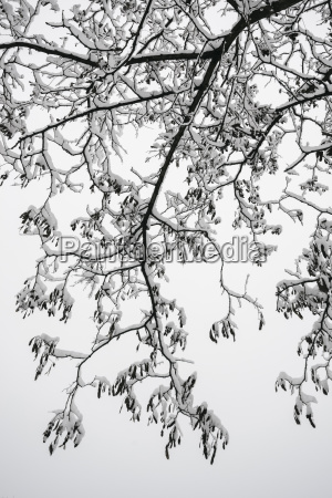 ukraine dnepropetrovsk region dnepropetrovsk city snow