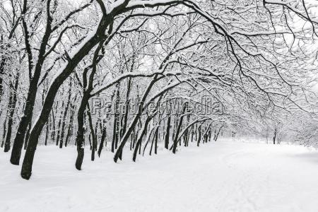 ukraine dnepropetrovsk region dnepropetrovsk city treelined