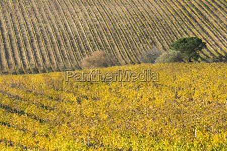 italy tuscany torrita di siena yellow