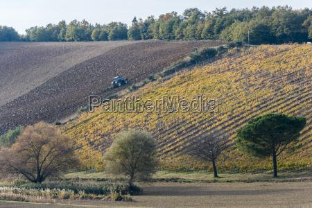 italy tuscany torrita di siena tractor