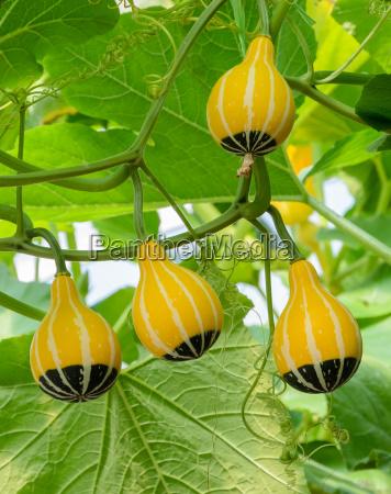 essen nahrungsmittel lebensmittel nahrung blatt baumblatt