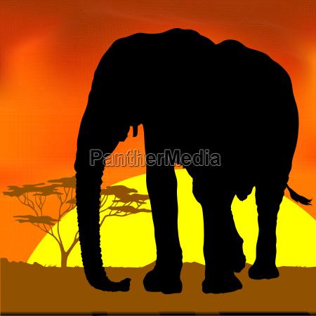 elephant silhouette an african sunset