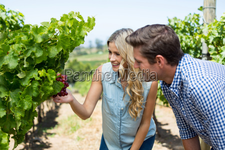 smiling couple looking at grapes growing