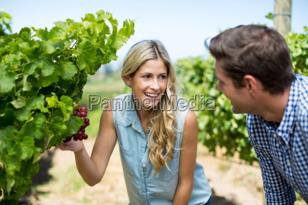happy couple looking at grapes growing