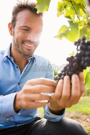 smiling man touching grapes at vineyard