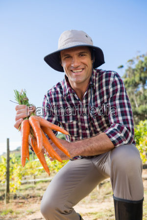 farmer holding harvested carrots in field