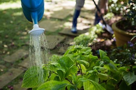 senior, paar, bewässerungsanlagen, mit, gießkanne, im - 23111061
