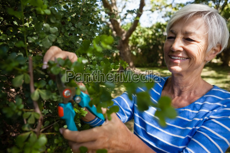 smiling senior woman trimming plants with