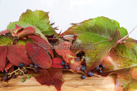 colorful autumn leaves on a wooden