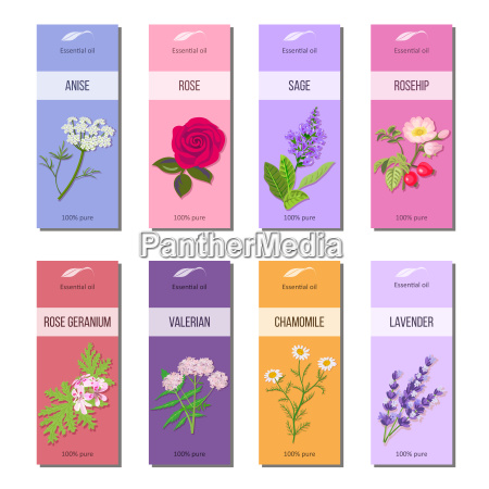 essential oil labels collection rose anise