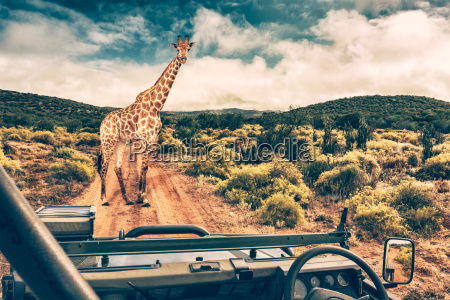 wildlife african safari