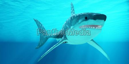 weisser hai mit sonnenstrahlen