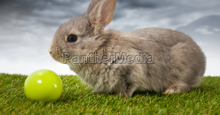 easter rabbit with egg ball in