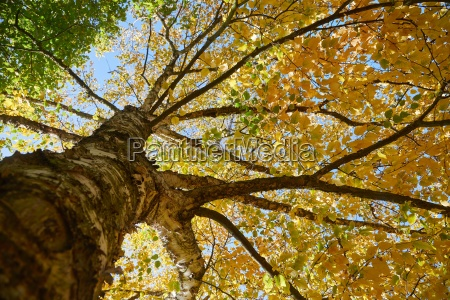 autumn tree branches
