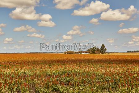 fields of australian agricultural landscape