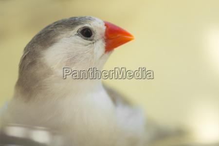 kleiner finkenvogel