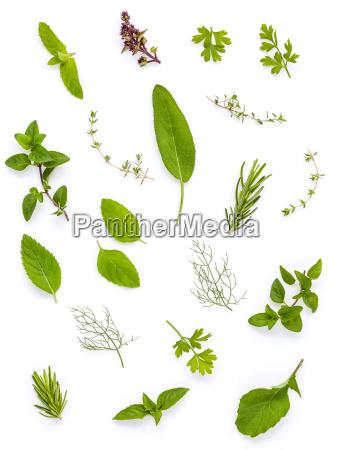 various fresh herbs from the garden