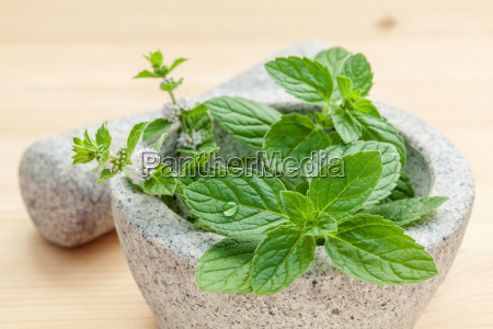 closeup fresh peppermint leaves in the