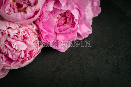 peonies on the black stone background