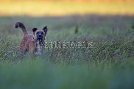 hund, auf, einer, lichtung, - 23359293