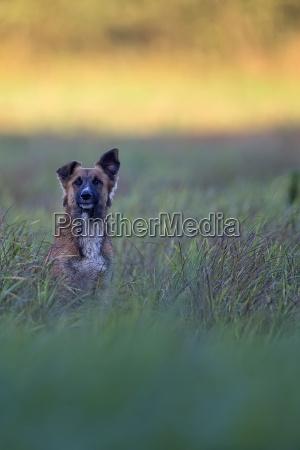 hund, auf, einer, lichtung, - 23359295