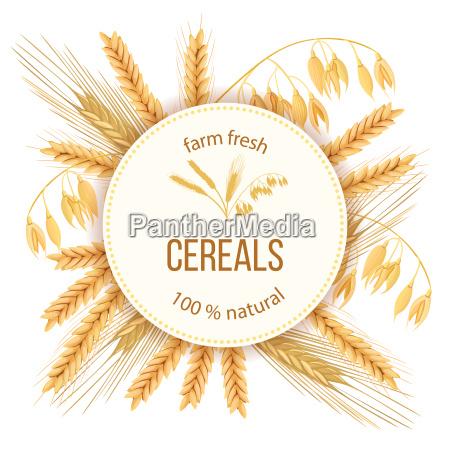 wheat barley oat and rye four