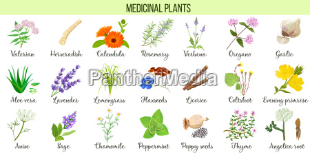 big vector set of medicinal plants