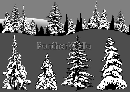 snowy coniferous tree set