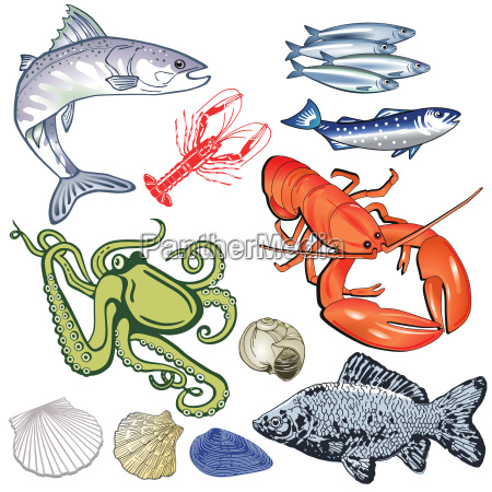 meeresfruechte fische muscheln illustration