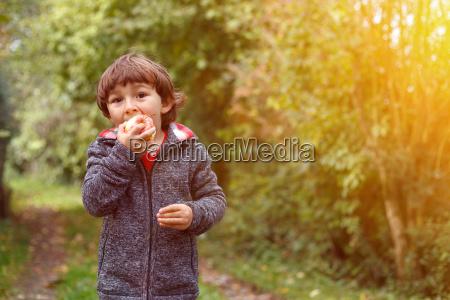 kleiner, junge, kind, apfel, obst, früchte - 23411136